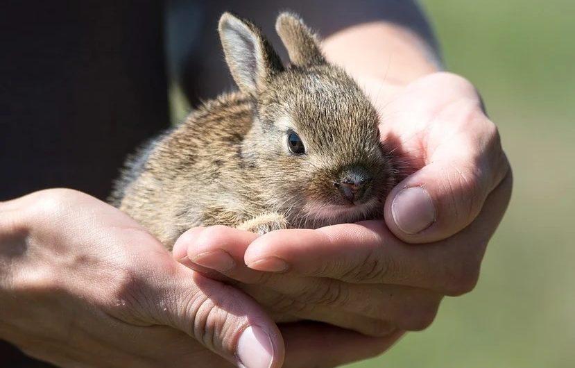 Behandlung aufgefundener Wildtiere