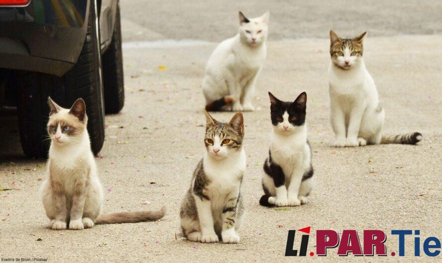 Eine Katzenschutzverordnung für Mannheim