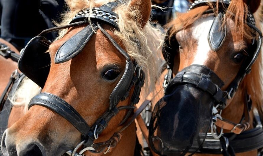 Ponykarussells in Mannheim untersagen